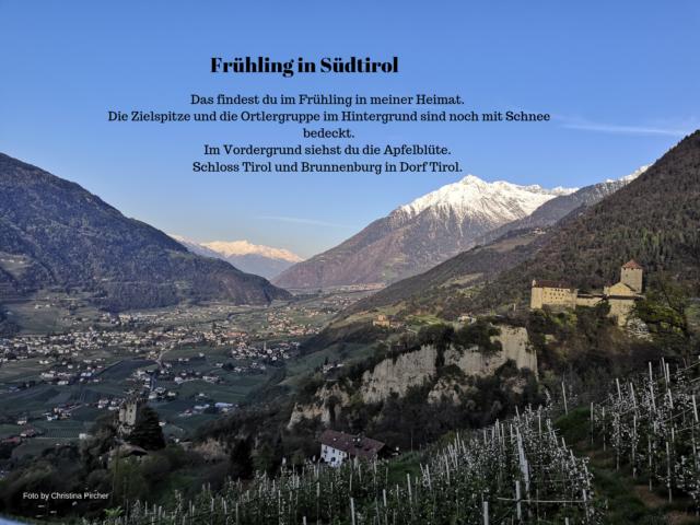 Die Zielspitze und Schloss Tirol mit blühenden Apfelbäume im Frühjahr.