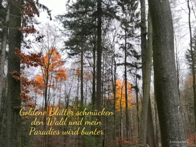 Goldene Blätter bringen den Wald zum Leuchten